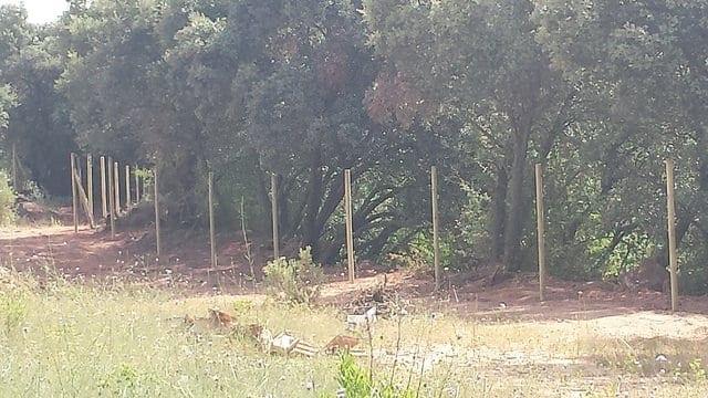 Postes de madera en cercado