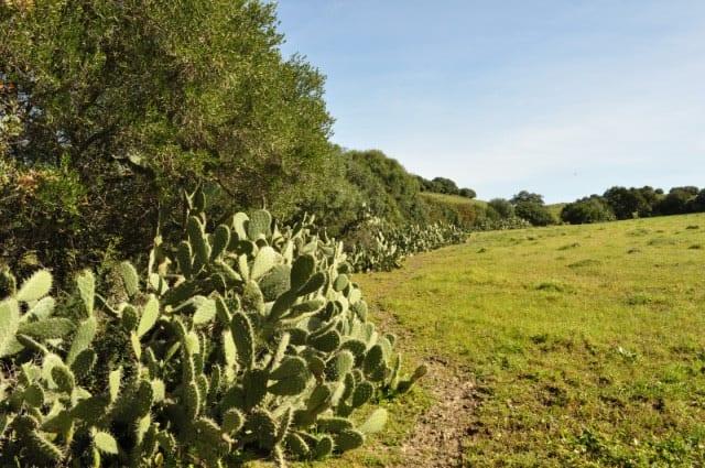 valla de cactus valla ecologica